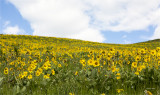Wildflowers National Bison Range, MT
