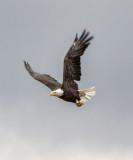 Eagle Flight, Lincoln County
