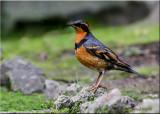 Monte La Salle flora & fauna