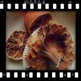 PudingCamera_LomoCamera...
