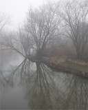 Foggy Mornings 5