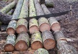 Cutting Firewood