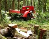 Picking up firewood