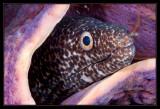 ted Moray Eel and Purple Tube Sponge