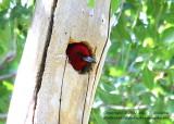 Peek-A-Boo - IMG_8216.JPG