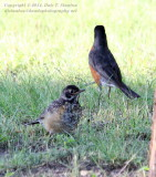Learning to Forage - IMG_8125.JPG