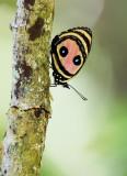 Butterflies and Moths of the World  / Dag en Nachtvlinders van de Wereld