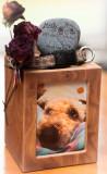 Misty  (1999 - 2013) - Soft Coated Wheaten Terrier