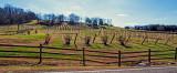 Tenneseee's Winery