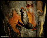 barking up the right tree.jpg