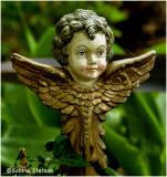 angel face.jpg