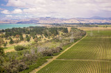Marlborough Vineyards, home of Sauvignon Blanc in New  Zealand