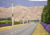 winery Roads, Blenheim