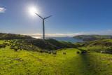 27 June 2015 - A walk at the West wind farm near Makara