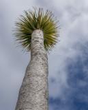 9 Dec 2015 - today's palm tree