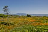 Otaki Beach, Dec 16 - with wild flowers