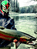 October 27 - November 2, 2012 --- Babine River, British Columbia