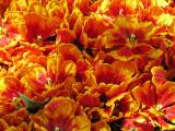 flower_galleries