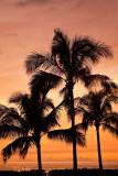 PARADISE COVE PALM SUNSET_9701.jpg
