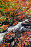 RICKETTS GLEN CASCADING FALLS_0897.jpg