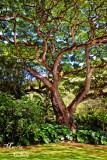 MAJESTIC TREE_9729.jpg