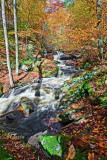 RICKETTS GLEN_0891.jpg