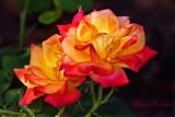 ROSE_3362.jpg