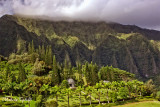 VALLEY OF THE TEMPLE KENEOHE_9615.jpg