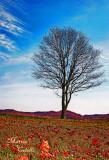 YORK CEMETARY TREE_8442.jpg