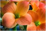 Tiny orange flowers.