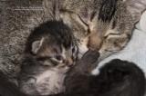 Mom+2 kittens