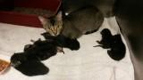 Lillian-kittens-NLF