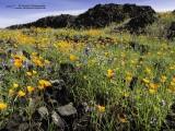 1511_P3210154_poppies+vulcano.jpg