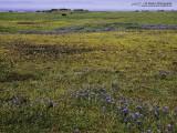 1511_P3210108_meadow.jpg