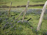 1511_P3210116_fence.jpg