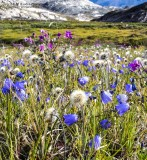 Springflowers on a hike to the glaciers