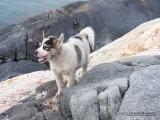 on puppy island