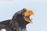 Japan's eagles