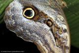 Ecuador moths & butterflies