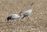Spain birds