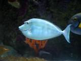 A Visit to the Austin Aquarium