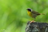 Birds trip