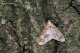 Erannis defoliaria - Grote Wintervlinder 1.JPG