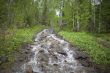 This stream was the only track leading upwards the Ridge.