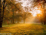 Light in a park, Magdeburg Germany