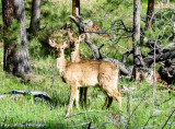 Deer sense the air