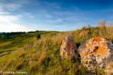 Landscape of Custer State Park