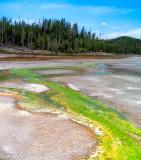 Yellowstone Cyanobacteria