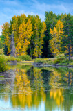 Snake River Fall Color