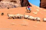Sheep Driving II